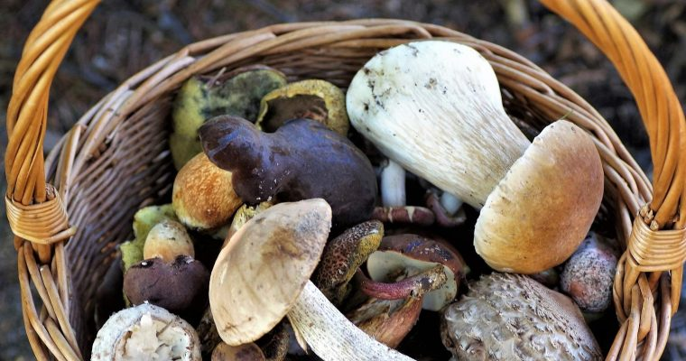 7 Delicious Mushrooms to Eat for A Long, Healthy Life
