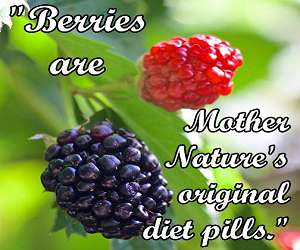 Berries are Mother Nature's original diet pills.